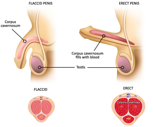 causes of erectile dysfunction morganstern medical